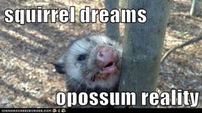 squirrel dreams  opossum reality