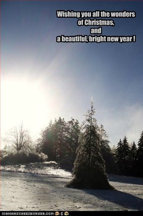 Wishing you all the wonders of Christmas, and a beautiful, bright new year !