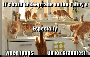 It's hard to keep tabs on the Tabby's                              Especially When foods             Up for Grabbies!