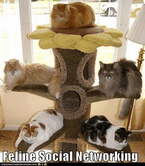 Feline Social Networking