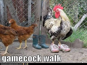 gamecock walk
