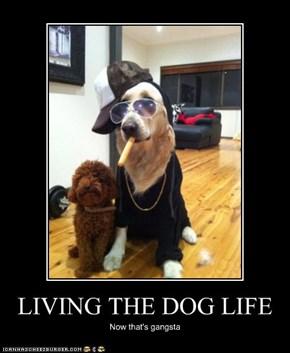 LIVING THE DOG LIFE