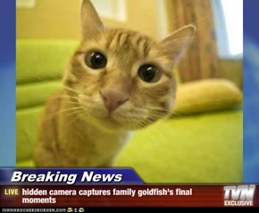 Breaking News - hidden camera captures family goldfish's final moments