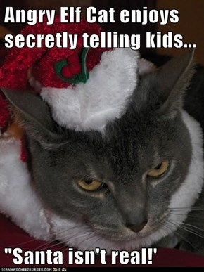 "Angry Elf Cat enjoys secretly telling kids...  ""Santa isn't real!'"