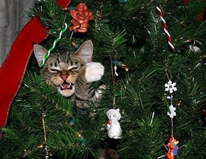 The 25 Days of Catmas: Does Anyone Else Find That Ornament a Little... Intimidating?