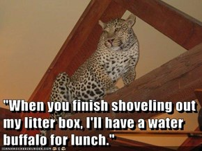 """""""When you finish shoveling out my litter box, I'll have a water buffalo for lunch."""""""