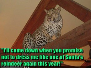 """""""I'll come down when you promise not to dress me like one of Santa's reindeer again this year!"""""""