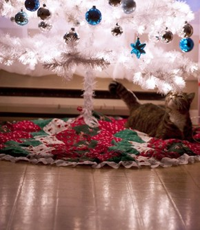 The 25 Days of Catmas: Destruction is Imminent