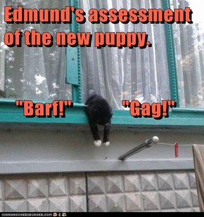 """Edmund's assessment of the new puppy.    """"Barf!""""             """"Gag!"""""""