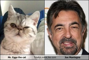 Mr. Eggs the cat Totally Looks Like Joe Mantegna