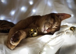 The 25 Days of Catmas: Not a Creature was Stirring...