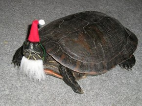 The Only Present Santa Turtle Delivers is Salmonella if You Don't Wash Your Hands After Touching Him