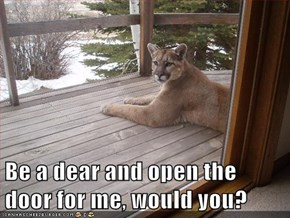 Be a dear and open the door for me, would you?