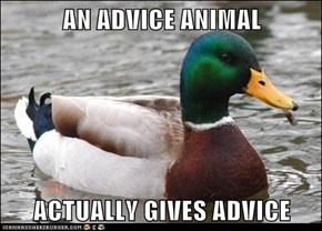 AN ADVICE ANIMAL  ACTUALLY GIVES ADVICE