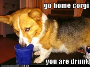 go home corgi  you are drunk