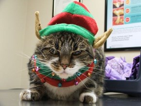 The 25 Days of Catmas: Ho Ho Ho?  No No No!