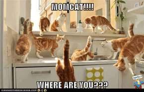 MOMCAT!!!!  WHERE ARE YOU???