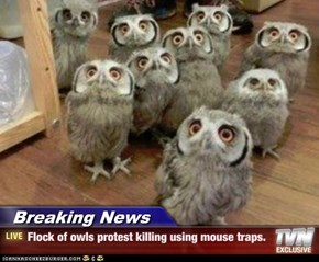 Breaking News - Flock of owls protest killing using mouse traps.