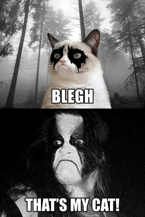 Abbath's Favorite Cat