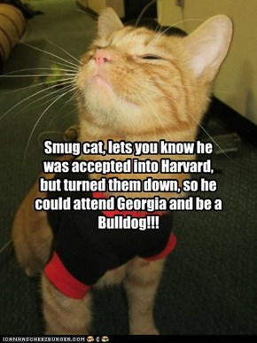 Smug cat, lets you know he was accepted into Harvard, but turned them down, so he could attend Georgia and be a Bulldog!!!