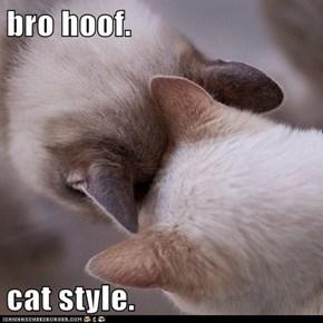 bro hoof.  cat style.