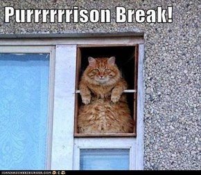 Purrrrrrison Break!