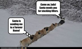 Santa's shepard guides pugs North!
