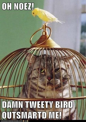 OH NOEZ!  DAMN TWEETY BIRD OUTSMARTD ME!