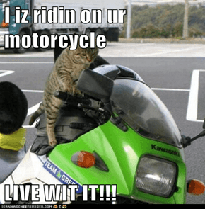 I iz ridin on ur motorcycle  LIVE WIT IT!!!