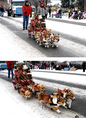 The Corgi Express