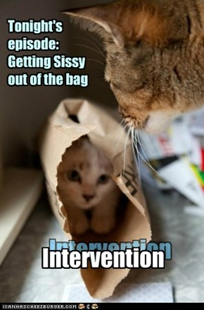 Reality TV for Cats