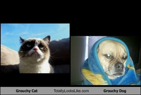 Grouchy Cat Totally Looks Like Grouchy Dog