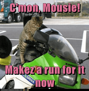 C'mon, Mousie!  Makez a run for it now