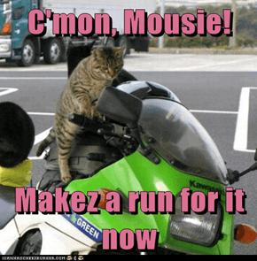 C'mon, Mousie!  Makez a run for it now