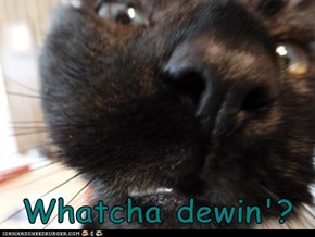 Whatcha dewin'?