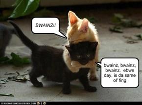 BWAINZ!!