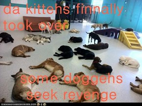 da kittehs finnally took over  some doggehs seek revenge