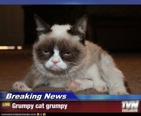 Breaking News - Grumpy cat grumpy