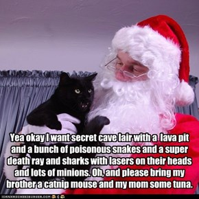 Even Basement Cat Remembers His Family