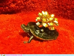 Ninja, The Christmas Turtle