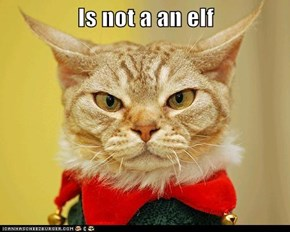 Is not a an elf