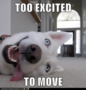 TOO EXCITED  TO MOVE