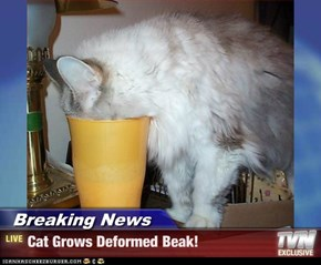 Breaking News - Cat Grows Deformed Beak!
