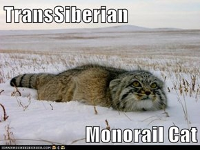 TransSiberian  Monorail Cat