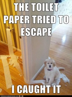 THE TOILET PAPER TRIED TO ESCAPE  I CAUGHT IT