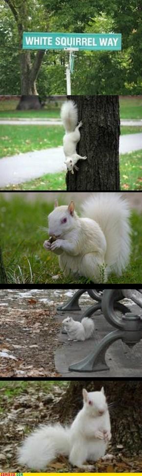 Squeerells