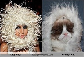 Lady Gaga Totally Looks Like Grumpy Cat
