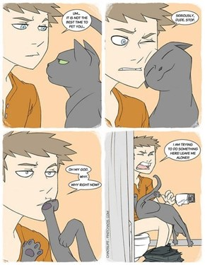 """Cats Don't Understand the Words """"Inappropriate"""" and """"Inconvenience"""""""