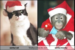 santa/cat Totally Looks Like santa/monky