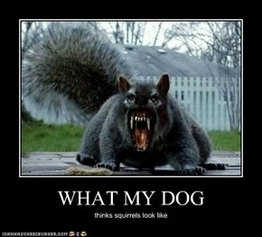 WHAT MY DOG